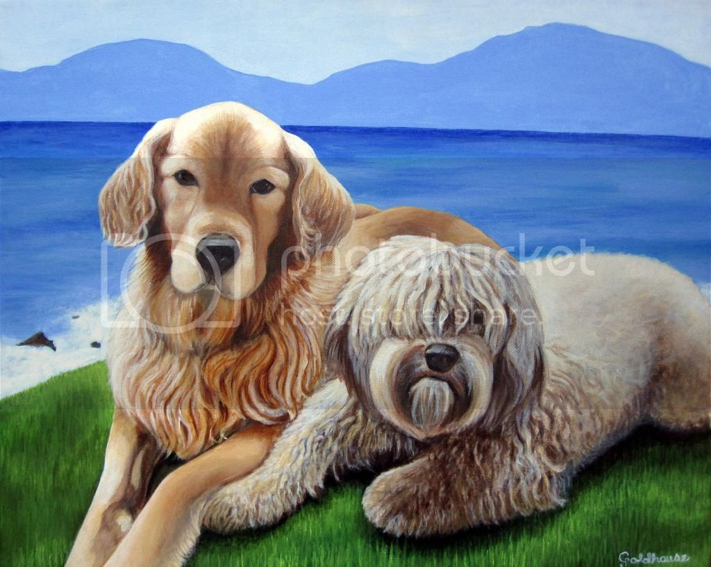dog portrait of Golden Retriever and Goldendoodle by the ocean