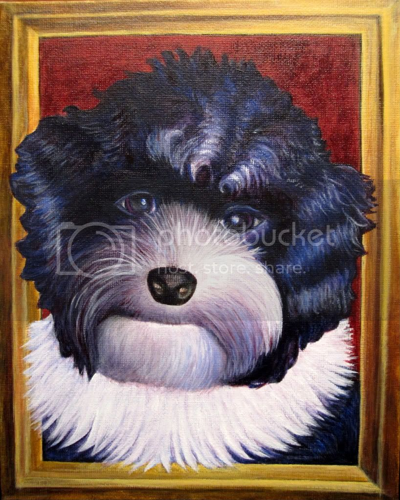 dog portrait of Havanese in Renaissance style with white collar in gold frame