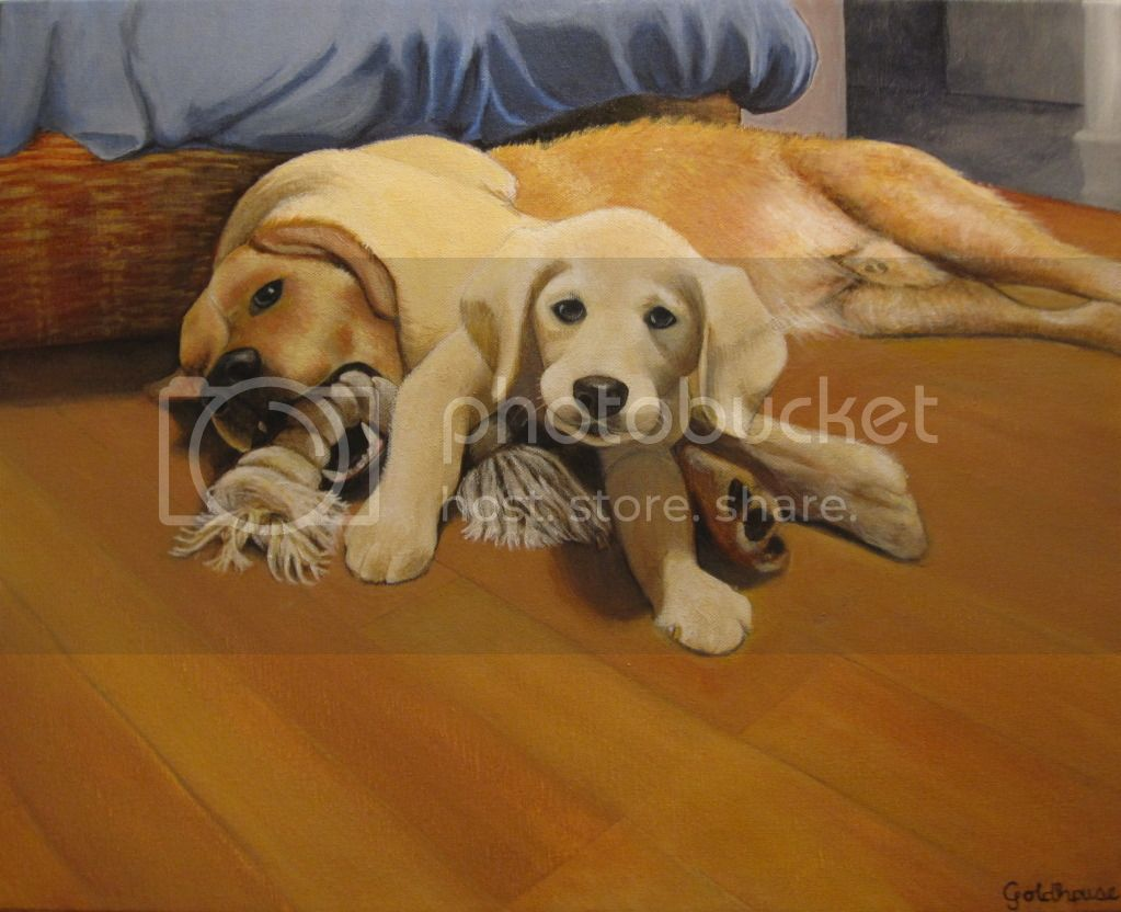 dog portrait of Golden Retriever and puppy playing with toy